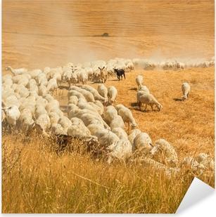 Pixerstick Sticker Kudde schapen in een veld van Toscane