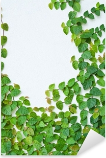Sticker Pixerstick La plante verte plante grimpante sur le mur de fond.