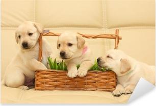 Pixerstick Sticker Labrador puppies