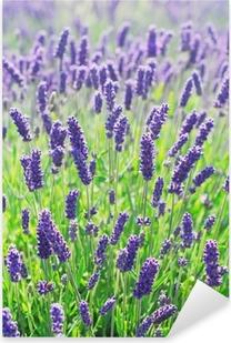 Pixerstick Sticker Lavendel bloemen bloeien in een veld