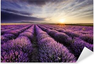 Pixerstick Sticker Lavendel Sunrise
