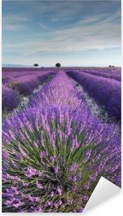 Pixerstick Sticker Lavendel veld in Provence tijdens de vroege uren van de ochtend