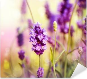 Lavender Field Pixerstick Sticker