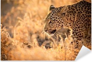 Leopard Walking at Sunset Pixerstick Sticker
