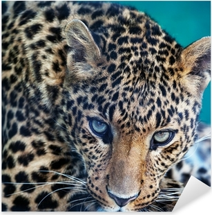 Pixerstick Sticker Leopard