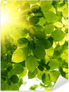 Sticker Pixerstick Les feuilles vertes avec rayon de soleil