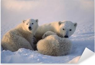 Sticker Pixerstick Les ours polaires, femelle cub allaite. Arctique canadien