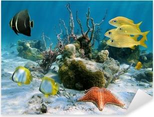 Sticker Pixerstick Les poissons et les étoiles de mer