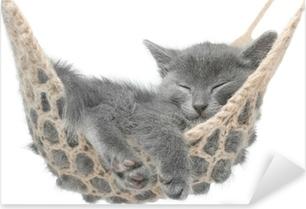 Pixerstick Sticker Leuk grijs katje dat in hangmat