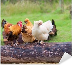 Sticker Pixerstick Libre parcours vivent oiseaux de volaille