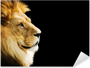 Lion portrait with copy space on black background Pixerstick Sticker