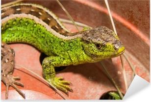 Lizard Pixerstick Sticker