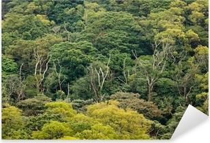 Pixerstick Sticker Luchtfoto van regenwoud