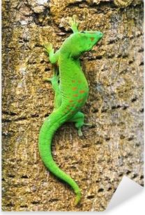 Madagascar day gecko .. Pixerstick Sticker