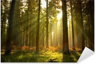 Sticker Pixerstick Magnifique forêt
