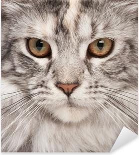 Maine-coon close-up portrait Pixerstick Sticker