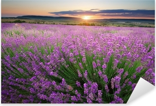 Meadow of lavender Pixerstick Sticker