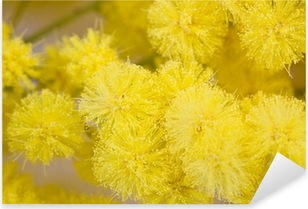 Sticker Pixerstick Mimosa