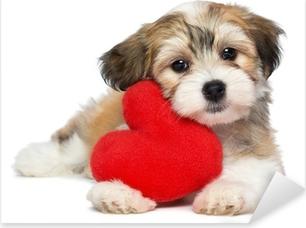 Pixerstick Sticker Minnaar Valentine Havanezer puppy hond met een rood hart