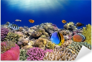 Sticker Pixerstick Monde sous-marin. Poissons coralliens de la mer Rouge.