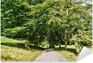 Narrow lane through an avenue of Lime trees. Pixerstick Sticker