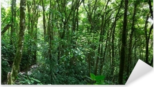 Sticker Pixerstick Nuage forêt au Costa Rica