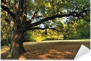 Pixerstick Sticker Oak Tree in Park
