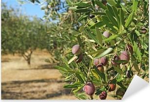 Olive grove in Greece Pixerstick Sticker