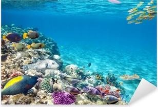 Pixerstick Sticker Onderwater wereld met koralen en tropische vissen.