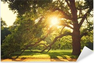 Pixerstick Sticker Oude grote boom