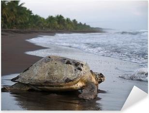 Pixerstick Sticker Overzeese schildpad in Tortuguero Nationaal Park, Costa Rica