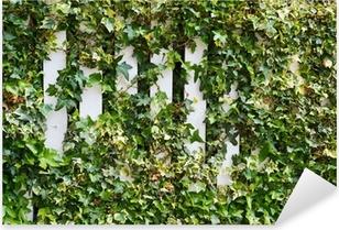 Parthenocissus tendril climbing decorative plant Pixerstick Sticker