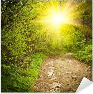 Path in the forest Pixerstick Sticker