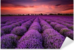Sticker Pixerstick Paysage magnifique avec un champ de lavande au coucher du soleil