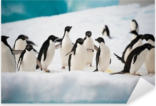 Pixerstick Sticker Pinguïns op de sneeuw