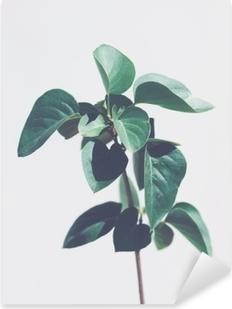 Sticker Pixerstick Plante verte laisse isolé sur fond gris clair. tons froids. espace de copie