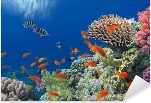 Sticker Pixerstick Poissons tropicaux sur les récifs coralliens de la mer Rouge