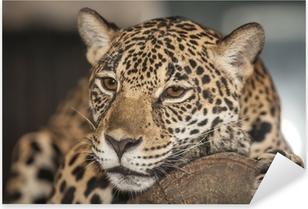 Sticker Pixerstick Portrait de léopard