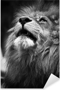Sticker Pixerstick Portrait de Lion regardant vers le haut