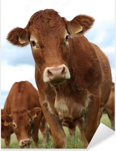 Sticker Pixerstick Portrait de vache