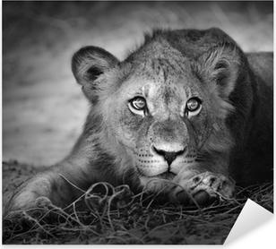 Sticker Pixerstick Portrait Jeune lion