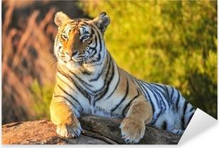Portrait of a Tiger Pixerstick Sticker