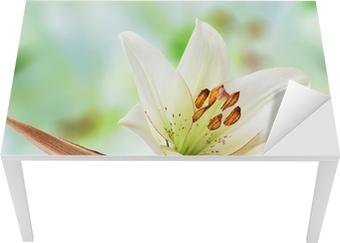 Papier Peint Belle Fleur De Lys Blanche Sur Une Feuille De Coco Palm