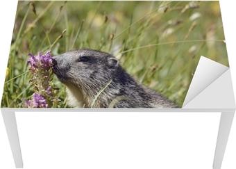 Sticker pour table et bureau Marmottes près de la fleur