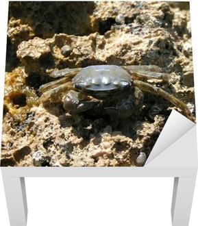 Tableau crabe gris 3 stickers pour table lack crabe gris