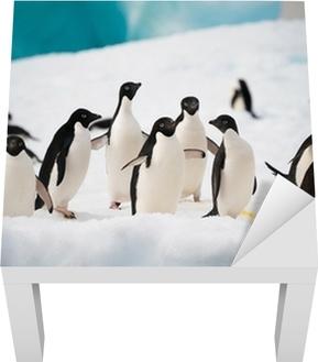Sticker pour table Lack Pingouins sur la neige
