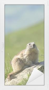 Sticker vitre Une marmotte mignon dans les Alpes