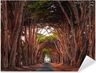 Pixerstick Sticker Prachtige cypress tree tunnel op punt reyes nationale kust, Californië, Verenigde Staten. bomen die rood gekleurd zijn door het licht van de ondergaande zon.