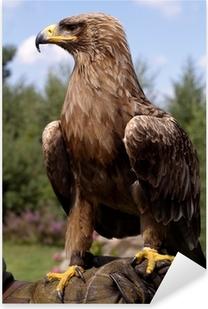 Pixerstick Sticker Profiel portret van mooie gouden adelaar