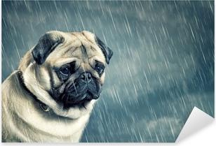 Pixerstick Sticker Pug in de regen